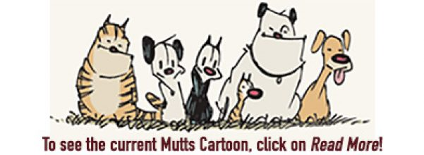 Mutts cartoons