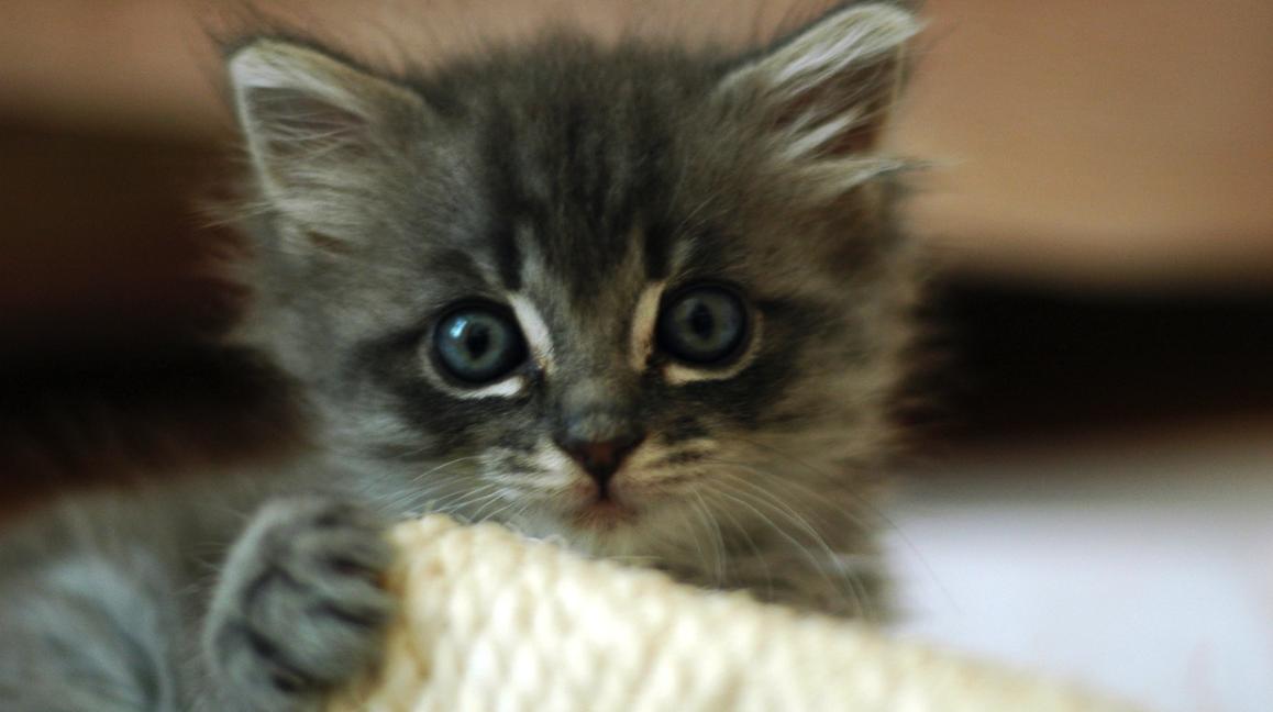 small cute things